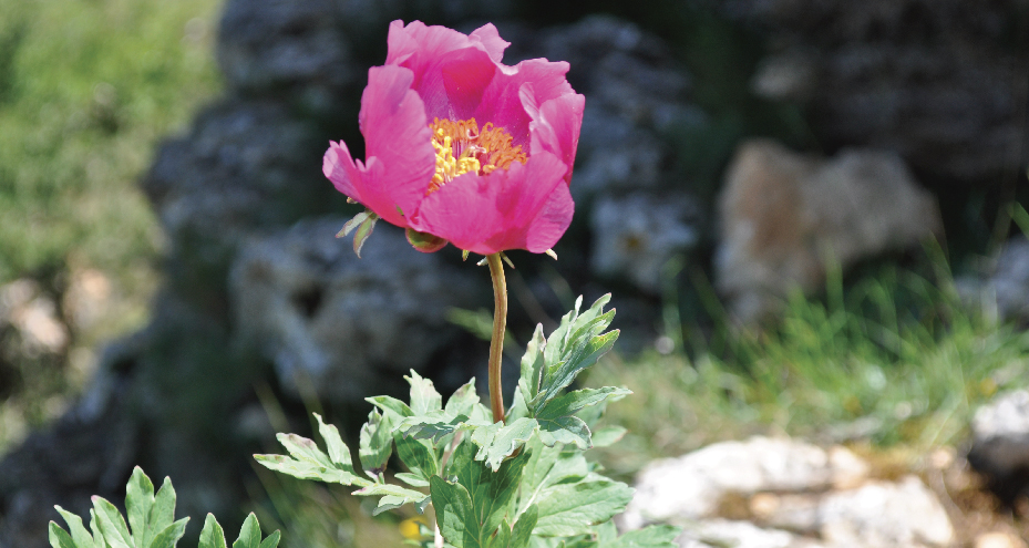 flors serra de llaberia-09