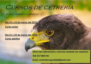 curs falconeria